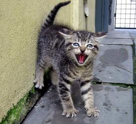 Kristabella: Full of Snark Since 1977 » Cat Scratch Fever